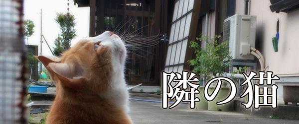 隣の家の猫(動画)